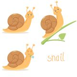 Cute Snail Royalty Free Stock Image