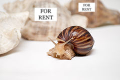 А cute snail shell chooses Stock Photography