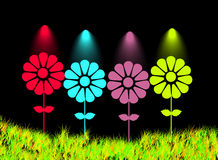 Cute soft color background flower, black gackground Stock Photos