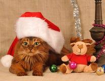 Cute somali cat portrait in Santa hat. Somali cat in funny Santa Claus red hat stock image