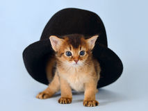 Cute somali kitten in a hat. On the blue background Stock Photo