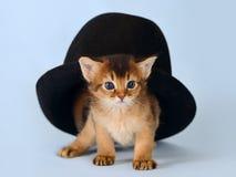 Cute somali kitten in a hat Stock Photo