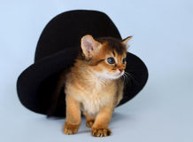 Cute somali kitten in a hat Stock Photography