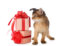 Cute somali kitten in a present box. Isolated on white background Stock Photo