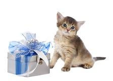 Cute somali kitten sitting near a present box. On white background Stock Photo