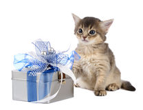 Cute somali kitten sitting near a present box. On white background Royalty Free Stock Photos