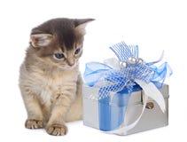 58054886e2e Cute somali kitten sitting near a present box. On white background stock  image