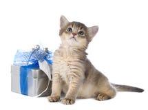 Cute somali kitten sitting near a present box. On white background Royalty Free Stock Image