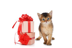Cute somali kitten stay near a present box. Isolated on white background Royalty Free Stock Photo