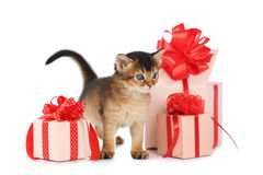 Cute somali kitten stay near a present box. Isolated on white background Stock Photos