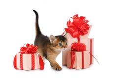 Cute somali kitten stay near a present box Stock Photo