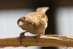 Cute sparrow Stock Photos
