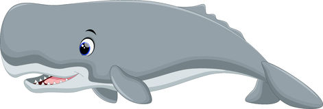 Cute sperm whale cartoon Stock Photo