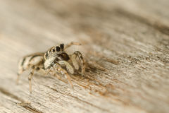 Cute Spider Stock Images