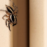 Cute spider on the wall Stock Photos