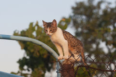 Cute spotted kitten sits high on the fence Stock Photography