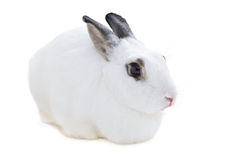 Cute spotted white rabbit on white isolate Stock Photo