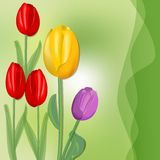 Cute spring background with colorful tulips on juicy green abstract blurry background, red, yellow and purple flower. Stock Image