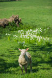 Cute in spring in field Royalty Free Stock Photos