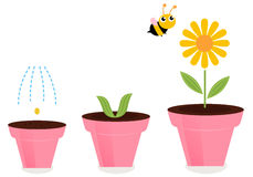 Flower in pots growth stages isolated on white Stock Photos