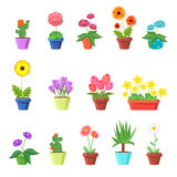 Cute spring flowers in pots vector. Flower spring, flower pot, floral plant, nature flower blossom, chamomile tulip sunflower illustration vector illustration