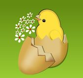 Cute spring theme with beautifull yellow chic in egg-shell  Stock Photography