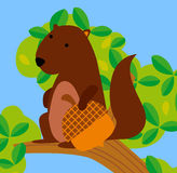 A cute squirrel Stock Photography