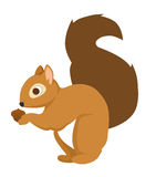 Cute Squirrel. Cute little brown squirrel holding an acorn Royalty Free Stock Photo