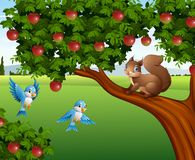 Cute squirrel on the apple tree. Illustration of Cute squirrel on the apple tree Royalty Free Stock Images