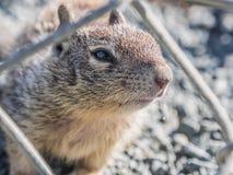 A cute squirrel Stock Photos