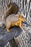 Cute squirrel on the bottom of the tree stock images