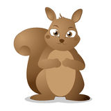 Cute squirrel cartoon Royalty Free Stock Images