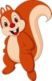 Cute squirrel cartoon Stock Photos