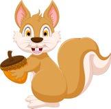 Cute squirrel cartoon holding hazelnut Royalty Free Stock Image