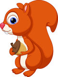 Cute squirrel cartoon with a white background Stock Photography