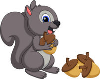 Cute squirrel cartoon with a white background Royalty Free Stock Images