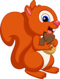 Cute squirrel cartoon with a white background Royalty Free Stock Image