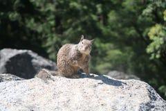 Squirrel Portrait Full stock image