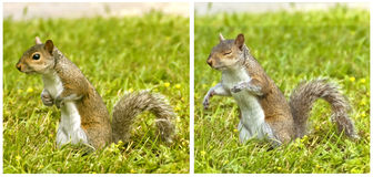 Cute squirrel poses and...winks Stock Photography