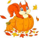 Cute squirrel in a pumpkin Royalty Free Stock Image