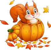 Cute squirrel in a pumpkin Royalty Free Stock Images