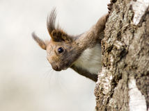 Cute squirrel in tree Stock Photos