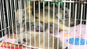 Cute squirrels in overcrowded cage. Little fluffy squirrels lying on soft towel in corner of overcrowded small cage on