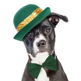 Cute St Patricks Day Dog Closeup. Closeup portrait of cute crossbreed dog wearing green St. Patrick`s Day hat and bow tie stock photos