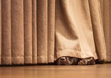 Free Cute Staffordshire Bull Terrier Dog Lying On A Wood Floor Hiding Under A Curtain Stock Photography - 135642642