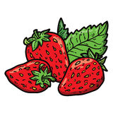 Cute strawberries. Vector cute hand drawn colorful strawberries and leaf Royalty Free Stock Photo