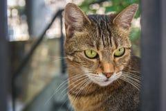Cute stray cat in the backyard Royalty Free Stock Photos
