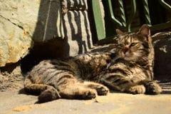 Cute stray cat, Tbilisi, Georgia royalty free stock photography