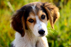 Cute stray dog. Picture of a Cute stray dog. Sad puppy Royalty Free Stock Images