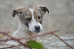 Cute Stray Dog portrait Stock Photography
